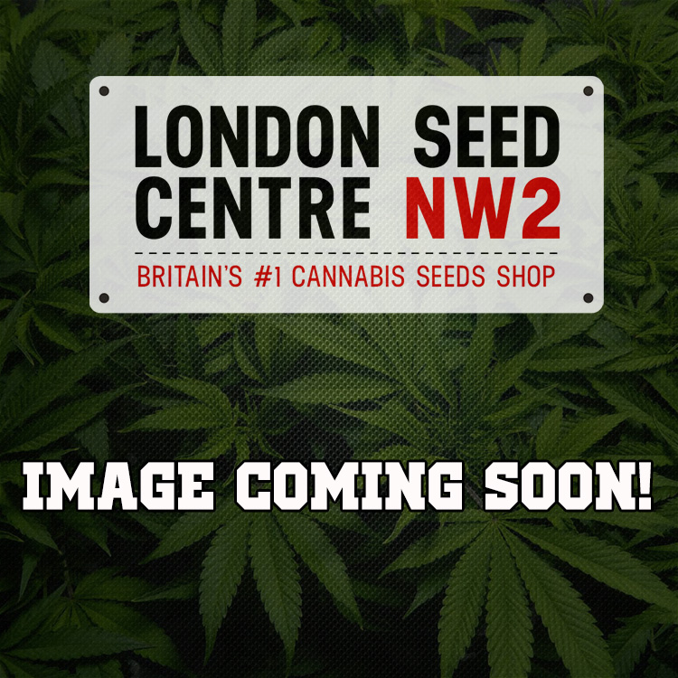Greenhouse Seeds Cannabis Seeds